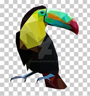 Bird Parrot Toucan Painting Art PNG