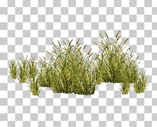 Grasses Tree Plant PNG