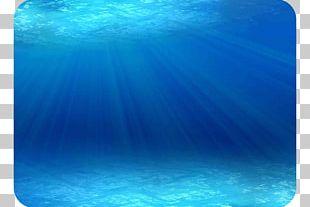 Ocean Marine Mammal Marine Biology Underwater Animal PNG