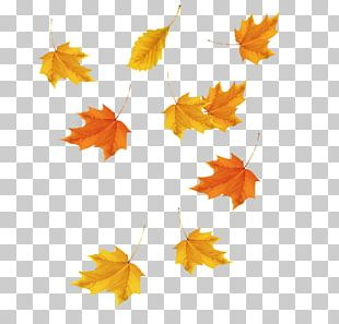 Maple Leaf Red Maple Icon PNG