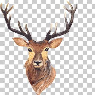 Red Deer Moose Antler Painting PNG