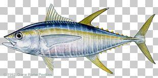 Blackfin Tuna Bigeye Tuna Yellowfin Tuna Atlantic Bluefin Tuna Fishing PNG