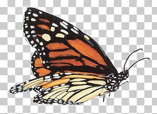 Monarch Butterfly Monarch School PNG