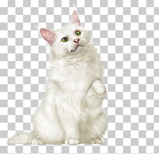 Whiskers Maine Coon Cymric Turkish Van Asian Semi-longhair PNG