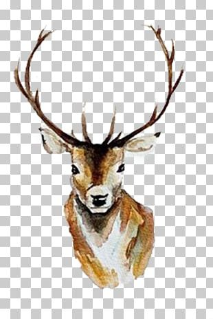 White-tailed Deer Watercolor Painting Antler PNG