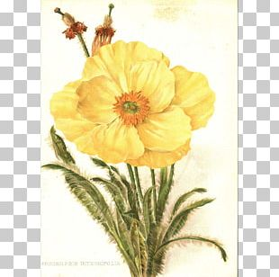 Flower Painting Botanical Illustration Drawing PNG