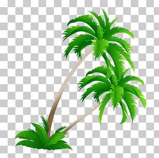 Coconut Tree Top PNG, Clipart, Art, Coconut, Coconut Clipart