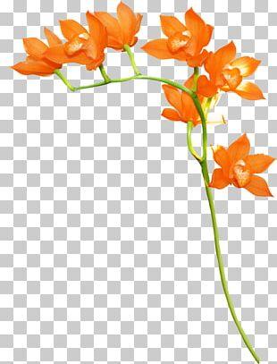 Orange Floral Design Flower PNG