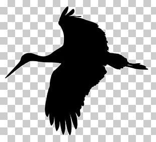 White Stork Bird PNG