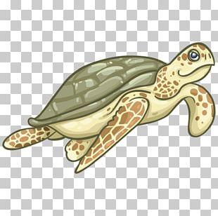 Loggerhead Sea Turtle Royal Gramma Box Turtles Tortoise Fish PNG