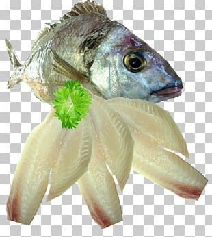 Sashimi Fish Seafood Fillet Squid As Food PNG