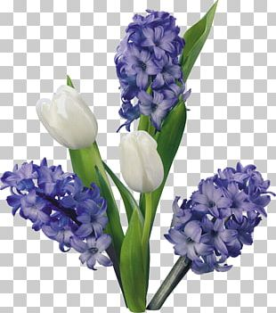 Hyacinth Flower Tulip Blog PNG