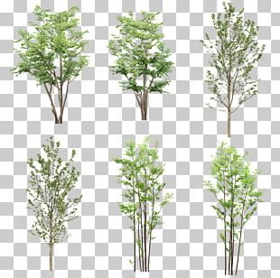 Tree Resource Computer File PNG
