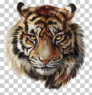 Tiger Watercolor Painting Drawing PNG