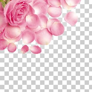 Rose Petal Flower Pink PNG