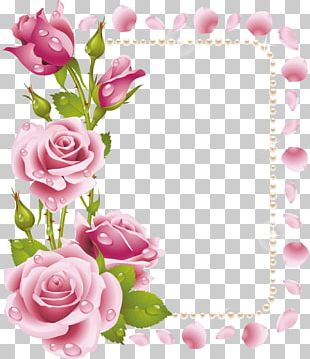 Rose Flower Frames Pink PNG