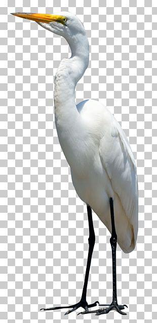 Bird Crane PNG