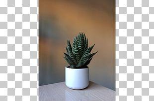 Houseplant Flowerpot Agave INAV DBX MSCI AC WORLD SF Aloe Vera PNG