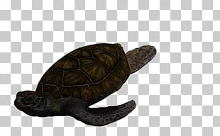 Box Turtles Green Sea Turtle Tortoise PNG