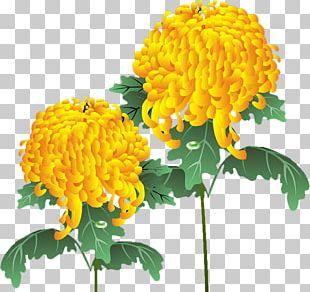 Chrysanthemum Yellow Dahlia Floral Design Flower PNG