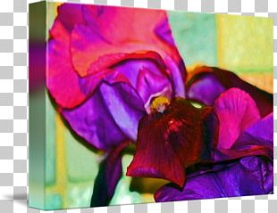 Acrylic Paint Pansy Rose Family Floral Design Violet PNG