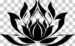 Nelumbo Nucifera Buddhist Symbolism Egyptian Lotus Plant Symbolism PNG