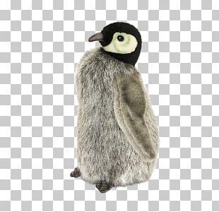 King Penguin Flightless Bird Fur PNG