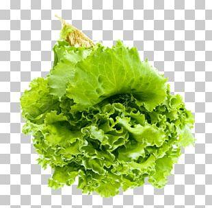 Lettuce Salad Portable Network Graphics Leaf Vegetable Vegetarian Cuisine PNG
