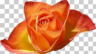 Rose Garden Desktop Flower PNG
