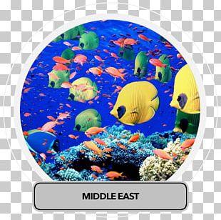 Red Sea Ocean Deep Sea Earth PNG