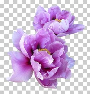 T-shirt Paper Lavender Flower Peony PNG