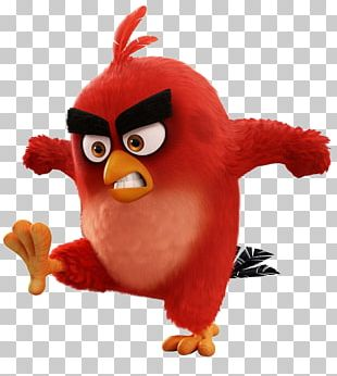 Bird Film YouTube Animation PNG