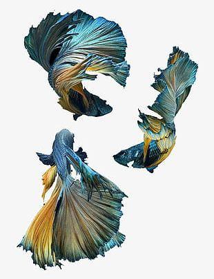 Blue Fish Rojo PNG