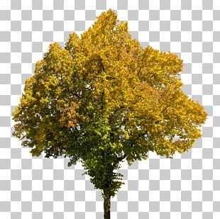 Tree Autumn Book PNG