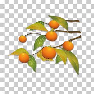 Kumquat Autumn PNG