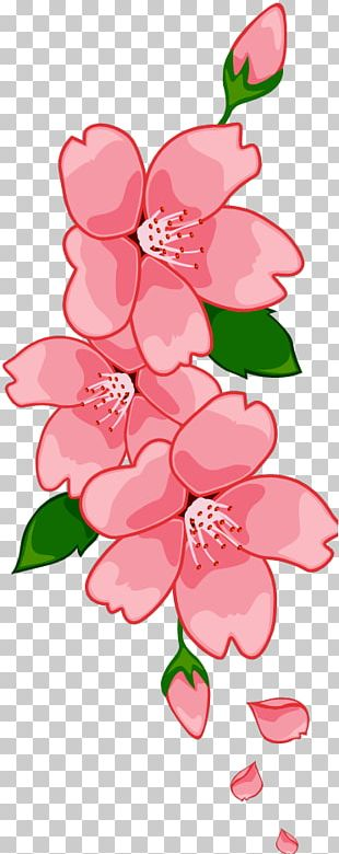Floral Design Cherry Blossom Cut Flowers PNG