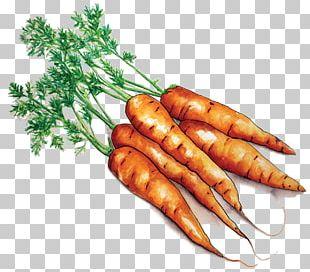 Farmto School Project Ma Local Food Carrot Farm To School PNG