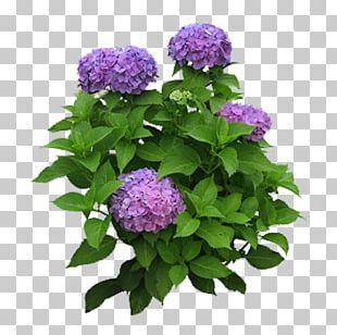 Flower Garden Flower Garden Hydrangea Shrub PNG