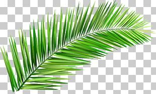 Arecaceae Coconut Tree Leaf Clay PNG