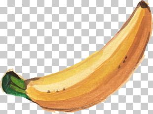 Banana Leaf Watercolor Painting PNG