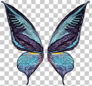 Butterfly Photography Wing PNG