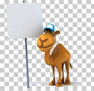 Camel Stock Photography Stock Illustration PNG