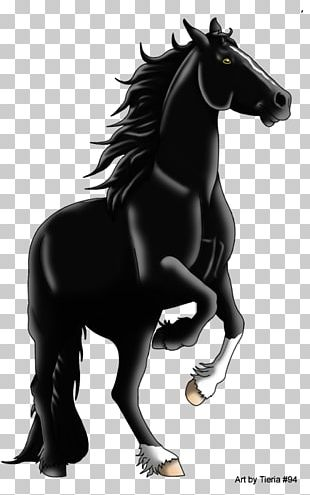 Arabian Horse Mustang Stallion Pony Colt PNG, Clipart