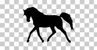 Tennessee Walking Horse Arabian Horse Pony Equestrian PNG