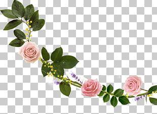 Cut Flowers Garden Roses Floral Design Floristry PNG