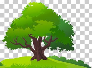 Tree Lawn PNG
