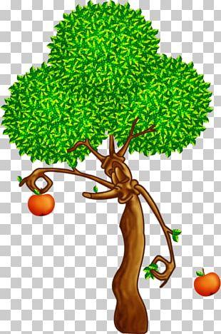 Branch Tree Oak Apples Plant PNG