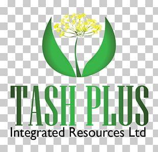 Logo Service Web Design PNG