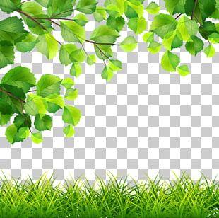 Green Branch Illustration PNG