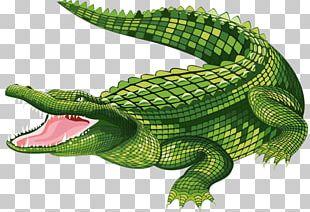 The Crocodile Alligator PNG
